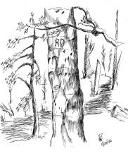 Tree Sketch 96